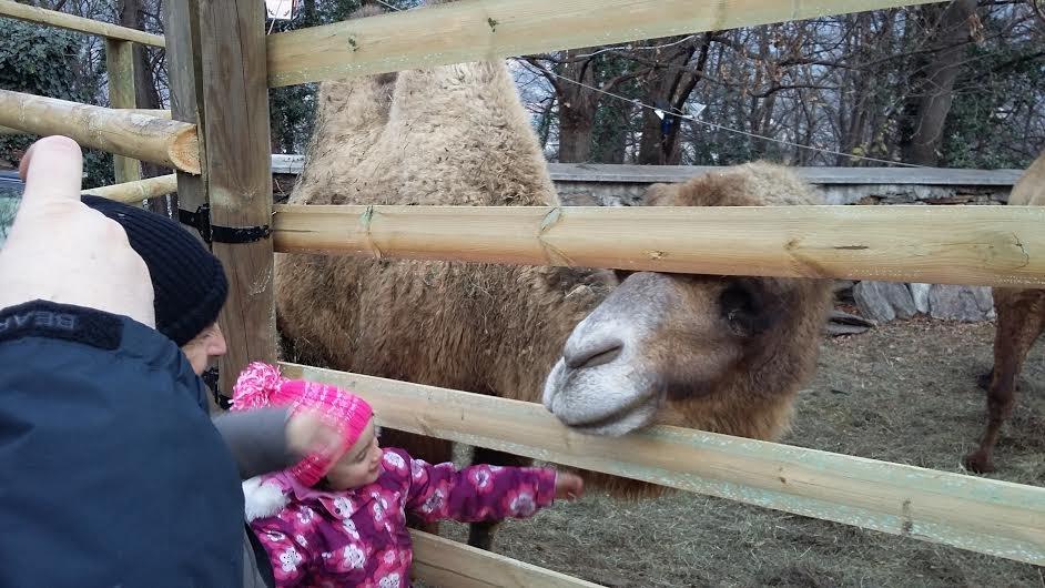 Parco con animali, renne, cammelli