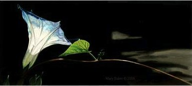 Morning Glory and Road, paintiing by Mary Baker