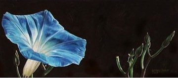 Blue Morning Glory, painting by Mary Baker