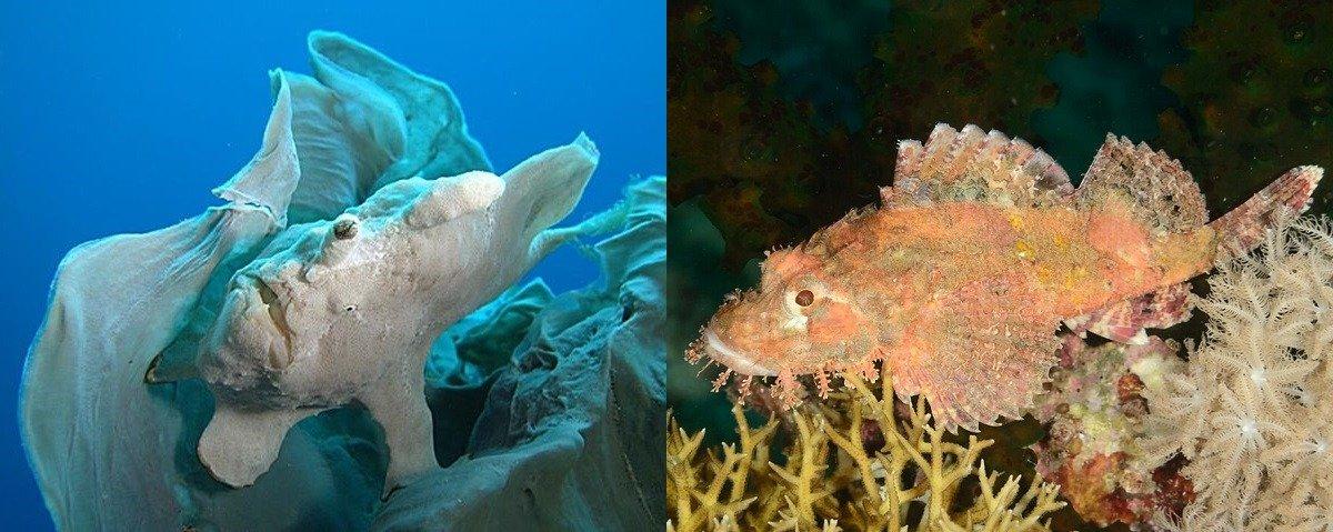 Frog fish & scorpion fish