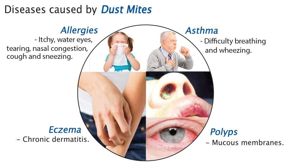 Diseases Caused By Dust Mite Allergens