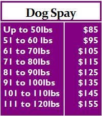 Dog Spay