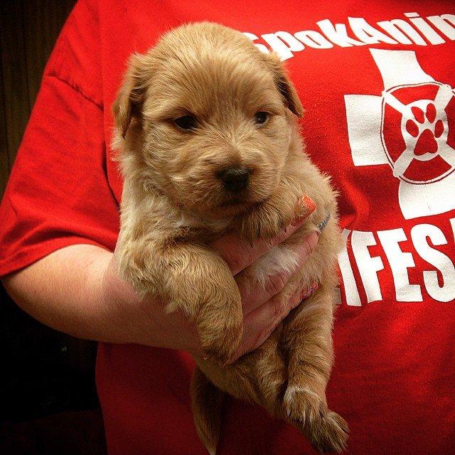 Baby puppy!!